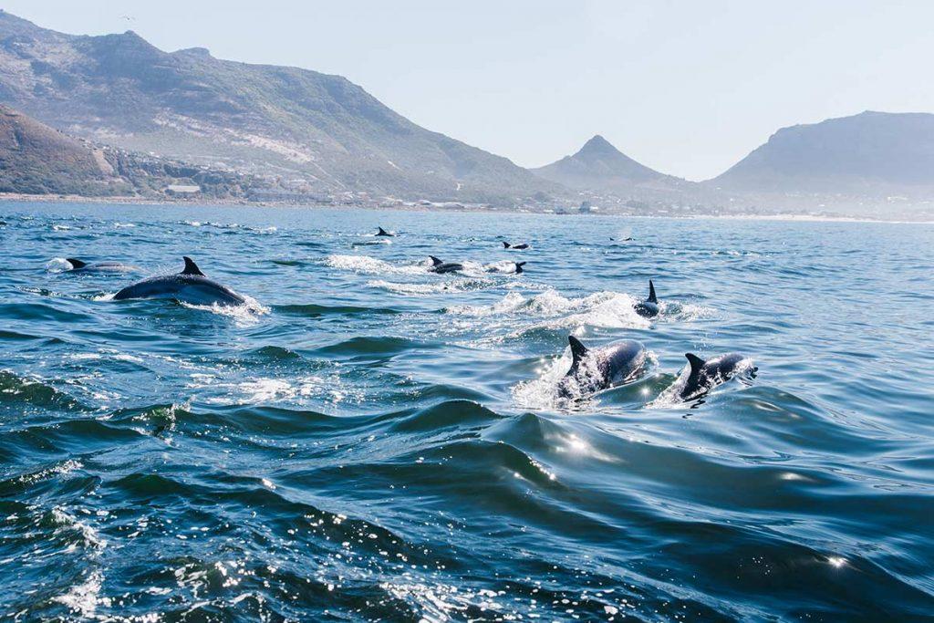 Das stetige Rauschen des Meeres hat etwas Kraftvolles und gleichzeitig Besänftigendes an sich