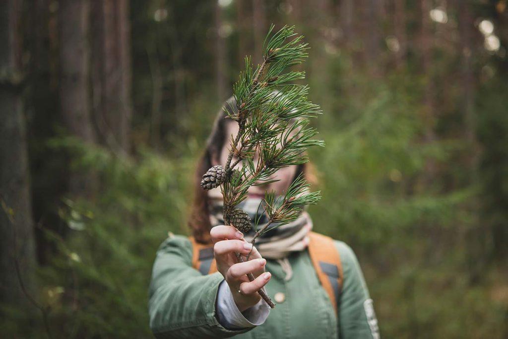 Wenn du dich hinlegst, die Augen schließt und Musik mit Naturgeräuschen hörst, kannst du den Wald und seine wohltuende Energie in deiner Fantasie wieder erwecken.